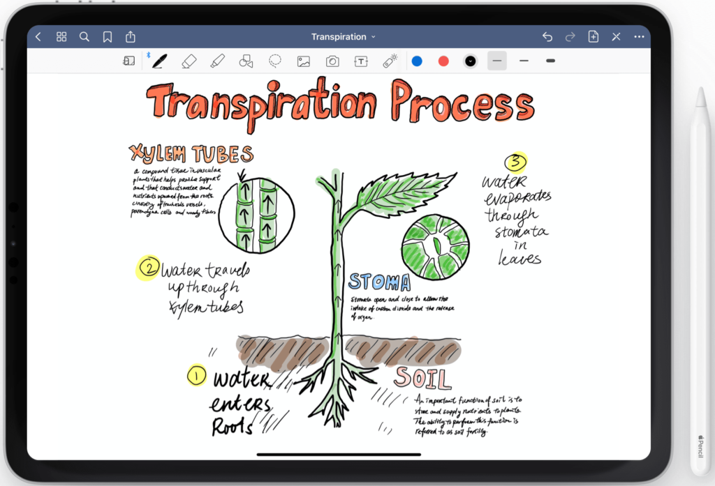 """good drawing of a plant with notes on the """"transpiration process"""" on the good notes ipad app"""