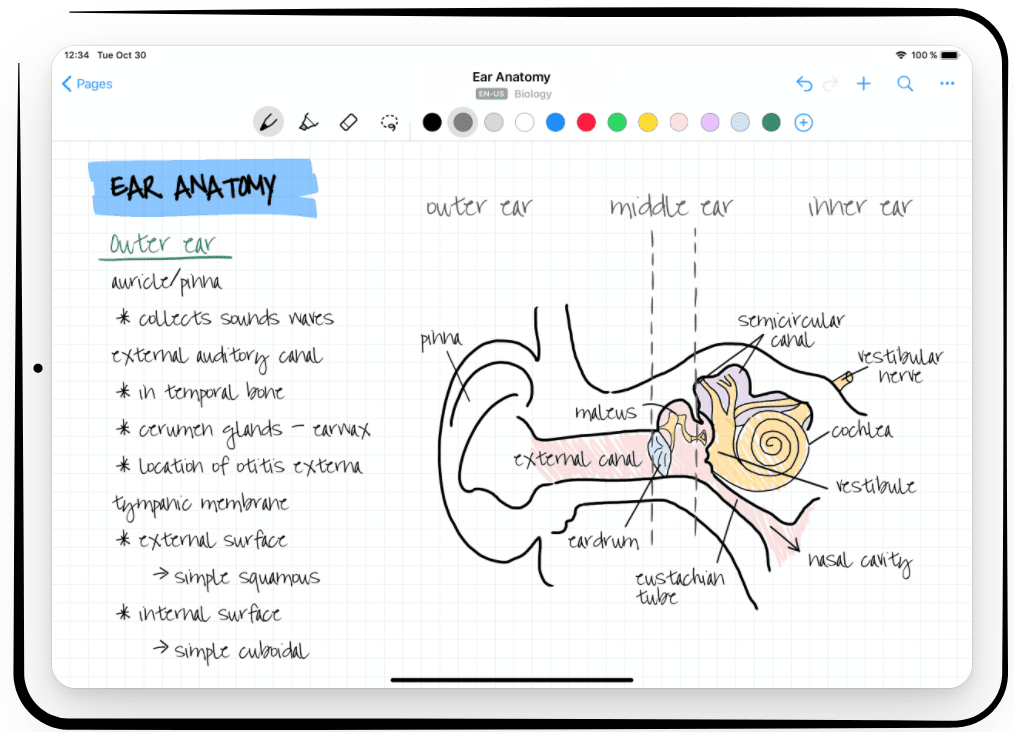 diagram of an ear with notes on ear anatomy on the nebo ipad app